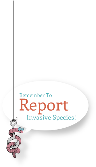 Remember to report invasive species!